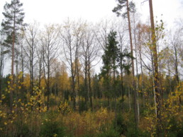 Syksyinen kuva varsinaissuomalaisesta metsästä.