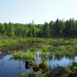 Kuva Järven kosteikosta Salossa