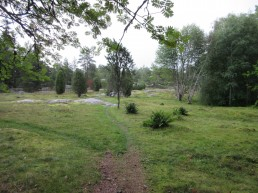 Kuvassa vehreä ketonäkymä, keskellä polku.