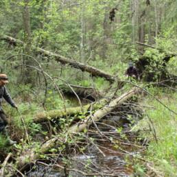 Puronventointia metsäpurolla